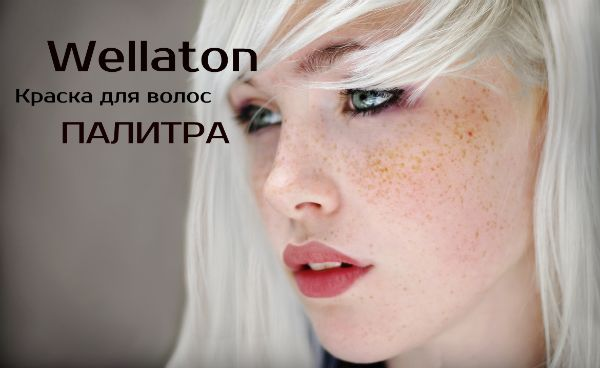 palitra-wellaton